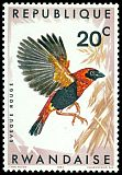 Cl: Red Bishop (Euplectes orix) <<Eveque rouge>>  SG 239 (1967) 8