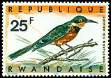 Cl: Cinnamon-chested Bee-eater (Merops oreobates) <<Gu&ecirc;pier des montagnes>>  SG 246 (1967) 75