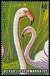 Cl: Greater Flamingo (Phoenicopterus roseus) SG 668a (1975)