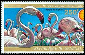 Cl: Greater Flamingo (Phoenicopterus roseus) <<Flamants roses>>  SG 549 (1974) 650