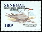 Cl: Common Tern (Sterna hirundo) <<Sterne pierregarin>>  SG 1394 (1995)