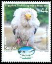 Cl: Egyptian Vulture (Neophron percnopterus)(I do not have this stamp)  SG 517 (2011)