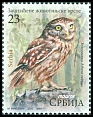 Cl: Little Owl (Athene noctua) new (2017)