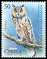 Cl: Northern Long-eared Owl (Asio otus) new (2017)