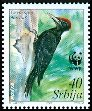 Cl: Black Woodpecker (Dryocopus martius)(Repeat for this country)  SG 293 (2007)