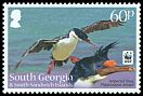 Cl: South Georgia Shag (Phalacrocorax georgianus)(Endemic or near-endemic)  SG 556 (2012)  [5/25]