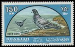 Cl: Rock Pigeon (Columba livia) SG 104 (1965) 350 [3/21]