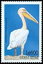 Cl: Great White Pelican (Pelecanus onocrotalus)(Out of range)  SG 3078 (1999)