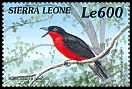 Cl: Black-headed Gonolek (Laniarius erythrogaster)(Out of range)  SG 3096 (1999)