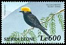 Cl: Yellow-crested Helmetshrike (Prionops alberti)(Out of range)  SG 3105 (1999)