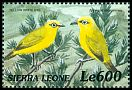 Cl: African Yellow White-eye (Zosterops senegalensis) SG 3110 (1999)