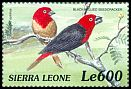 Cl: Black-bellied Seedcracker (Pyrenestes ostrinus)(Out of range)  SG 3119 (1999)
