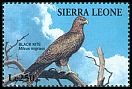 Cl: Black Kite (Milvus migrans) SG 2154 (1995)