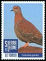 Cl: Speckled Pigeon (Columba guinea) new (2019)  [11/64]