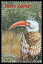 Cl: Red-billed Hornbill (Tockus erythrorhynchus) SG 3144 (1999) 55
