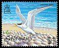 Great Crested Tern (Sterna bergii)