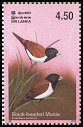 Cl: Black-headed Munia (Lonchura malacca) SG 1665 (2003)