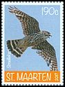 Cl: Merlin (Falco columbarius) new (2017)  [11/31]
