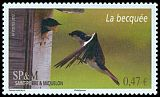 Cl: Tree Swallow (Tachycineta bicolor) SG 1143 (2012)