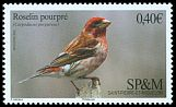 Cl: Purple Finch (Carpodacus purpureus) <<Roselin pourpr&eacute;>>  SG 1234 (2016) 230