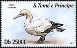 Cl: Cape Gannet (Morus capensis) new (2013)