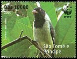 Cl: Sao Tome Oriole (Oriolus crassirostris)(Endemic or near-endemic) (not catalogued)  (2008)  [4/50]
