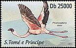 Cl: Lesser Flamingo (Phoenicopterus minor) new (2013)
