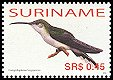 Cl: Grey-breasted Sabrewing (Campylopterus largipennis) SG 2162 (2006) 55