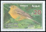 Cl: Cinereous Bunting (Emberiza cineracea) SG 2328 (2009) 240