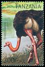 Cl: Ostrich (Struthio camelus)(Repeat for this country) (not catalogued)  (1996)