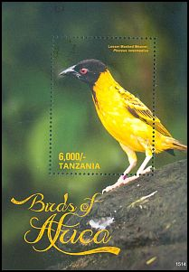 Cl: Black-headed Weaver (Ploceus melanocephalus) new (2016)