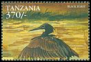 Cl: Black Heron (Egretta ardesiaca)(not catalogued)  (1999)
