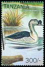 Cl: Comb Duck (Sarkidiornis melanotos)(not catalogued)  (1996)