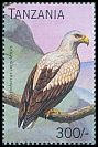 Cl: Palm-nut Vulture (Gypohierax angolensis)(not catalogued)  (1996)