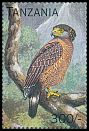 Cl: Philippine Serpent-Eagle (Spilornis holospilus)(Out of range) (not catalogued)  (1996)