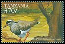 Cl: Crowned Lapwing (Vanellus coronatus)(not catalogued)  (1999)