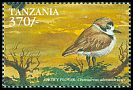 Cl: Snowy Plover (Charadrius alexandrinus)(not catalogued)  (1999)