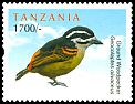 Cl: Yellow-rumped Tinkerbird (Pogoniulus bilineatus) new (2012)