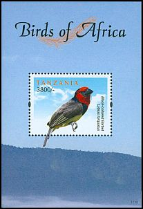 Cl: Black-collared Barbet (Lybius torquatus)(Repeat for this country)  new (2011)  [7/44]