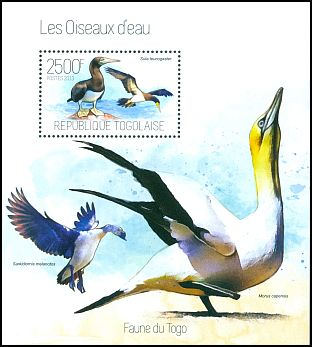 Cl: Brown Booby (Sula leucogaster) new (2013)