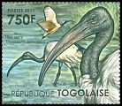 Cl: Sacred Ibis (Threskiornis aethiopicus)(I do not have this stamp)  new (2011)