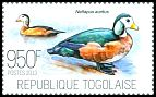 Cl: African Pygmy-goose (Nettapus auritus) new (2013)
