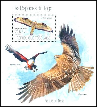Cl: European Honey-buzzard (Pernis apivorus) new (2013)