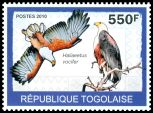 Cl: African Fish-Eagle (Haliaeetus vocifer) new (2010)