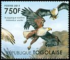 Cl: African Fish-Eagle (Haliaeetus vocifer)(Repeat for this country)  new (2011)  [7/42]