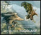 Cl: White-tailed Eagle (Haliaeetus albicilla)(Out of range)  new (2011)  [7/42]
