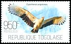 Cl: Palm-nut Vulture (Gypohierax angolensis) new (2013)