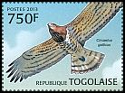 Cl: Short-toed Eagle (Circaetus gallicus) new (2013)