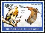 Cl: Tawny Eagle (Aquila rapax) new (2010)