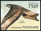 Cl: African Hawk-Eagle (Aquila spilogaster) new (2013)